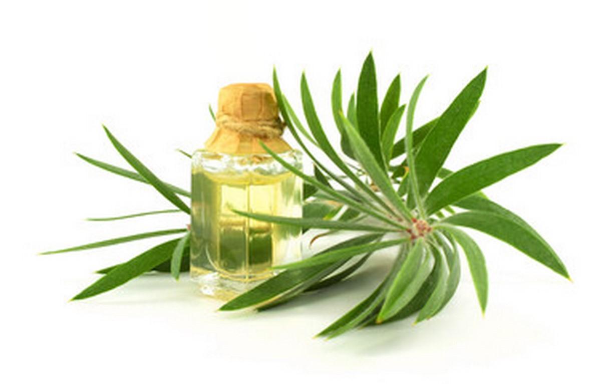 drzewo-herbaciane-kosmetyki