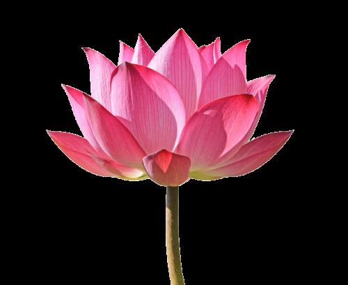 ekstrakt-lotos-kosmetyki (1)