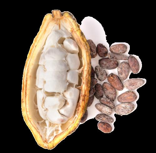 masło-kakaowe-zalety (2)
