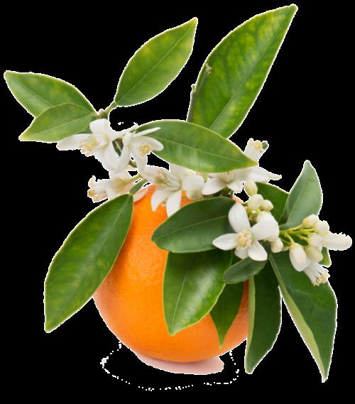 olejek-gorzka-pomarańcza (2)