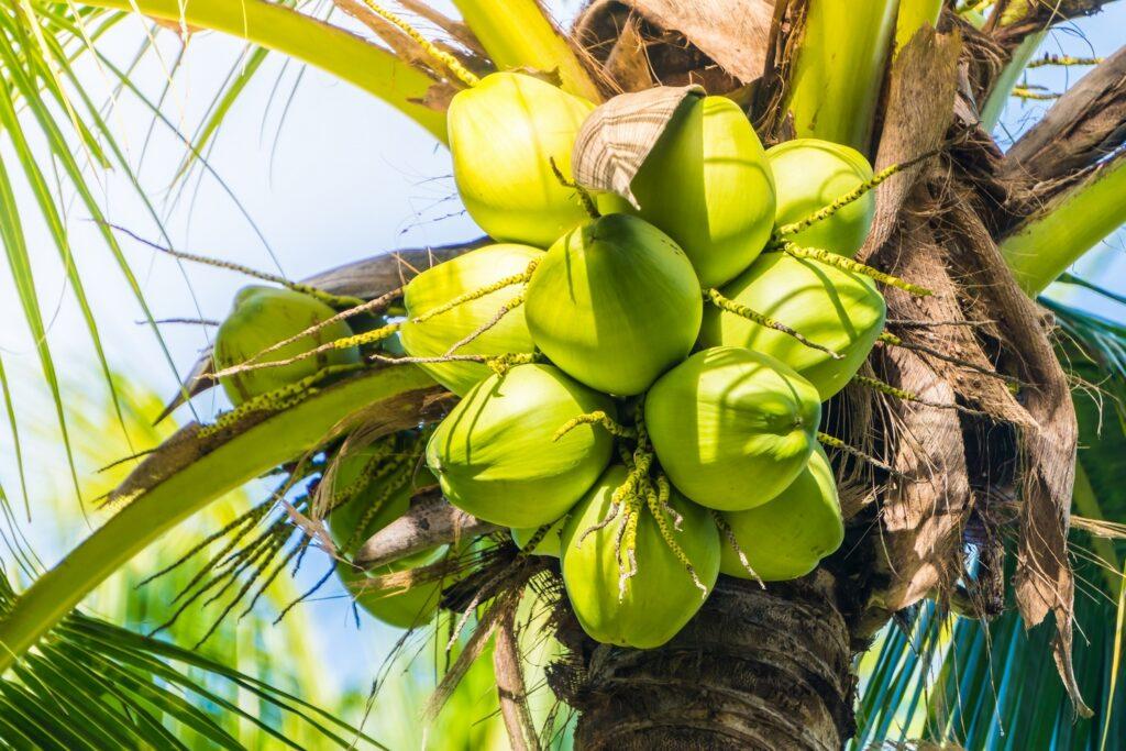 kokosowa-wyspa-Ko-Samui-TAJLANDIA